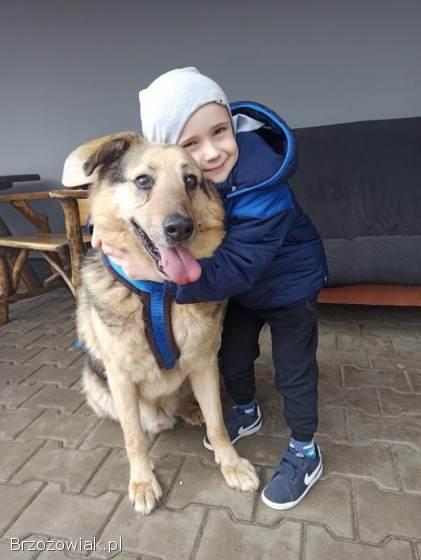 Alf -  przytulaśny,  dzieciolubny misiek do adopcji!